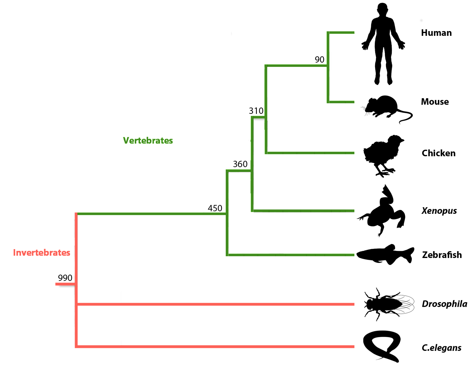 MOD phylogenetic tree.png