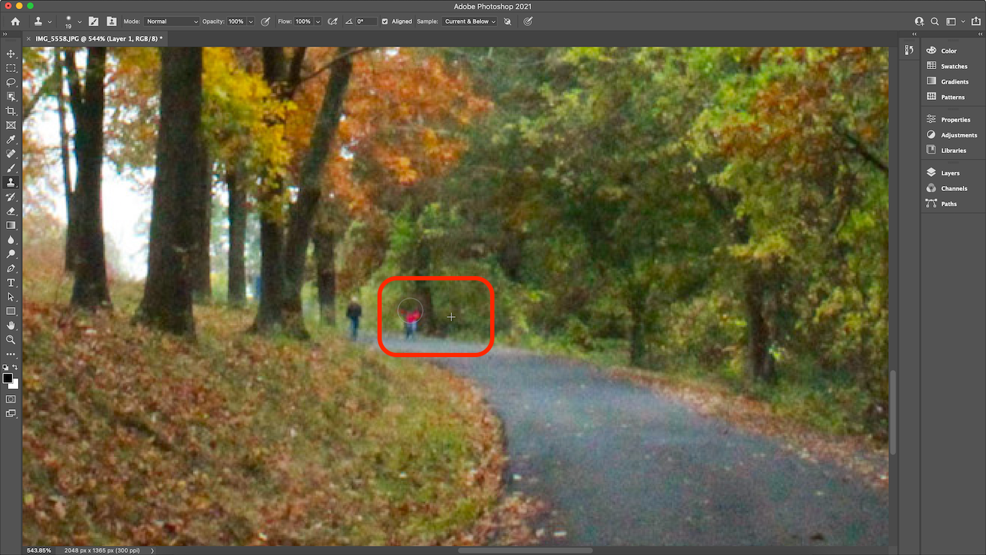 Screenshot of painting with Clone Stamp in Photoshop.