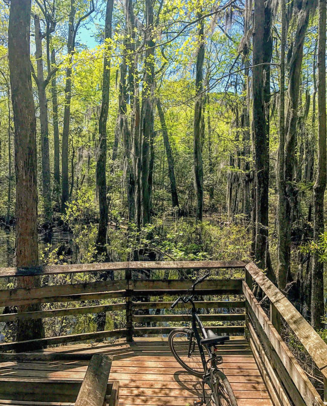 Bald Cypress Trail