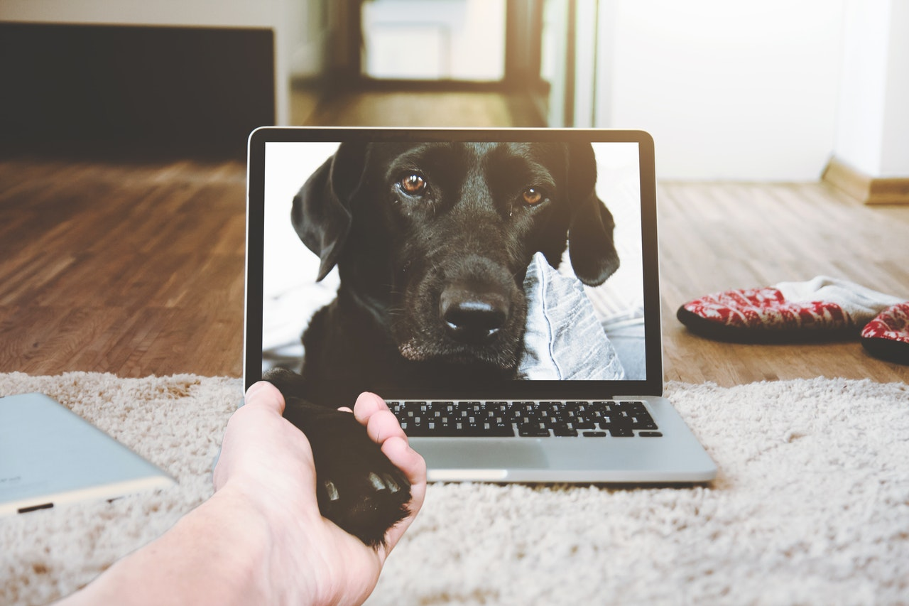 4 Best Pet Cameras to Watch Your Pet From Anywhere!