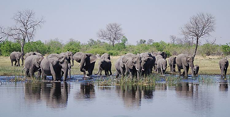 Okavango-elephants-pool.jpg