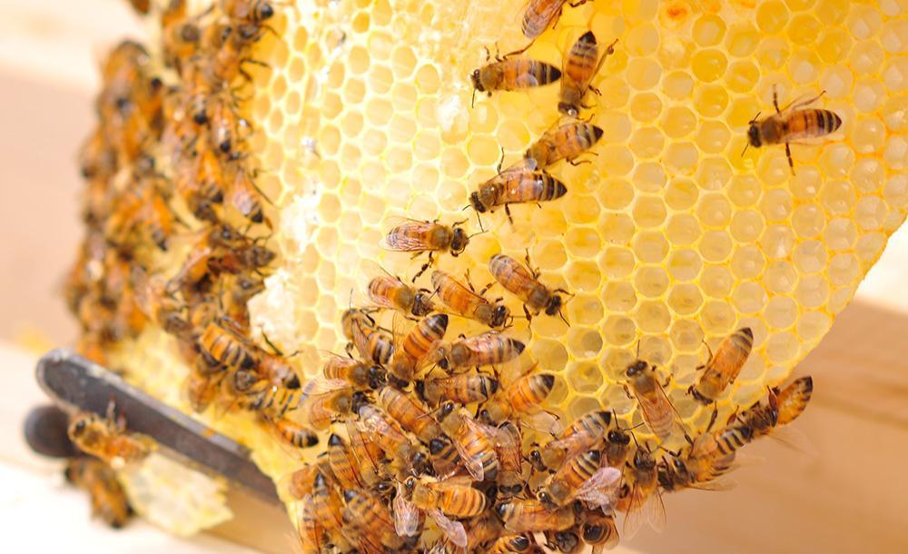 The Benefits of Beekeeping - BackYardHive