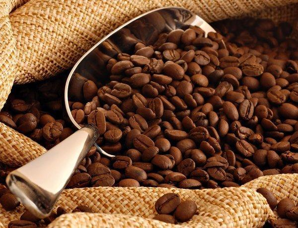 Motherland nơi cung cấp hạt cà phê giá sỉ cho quán