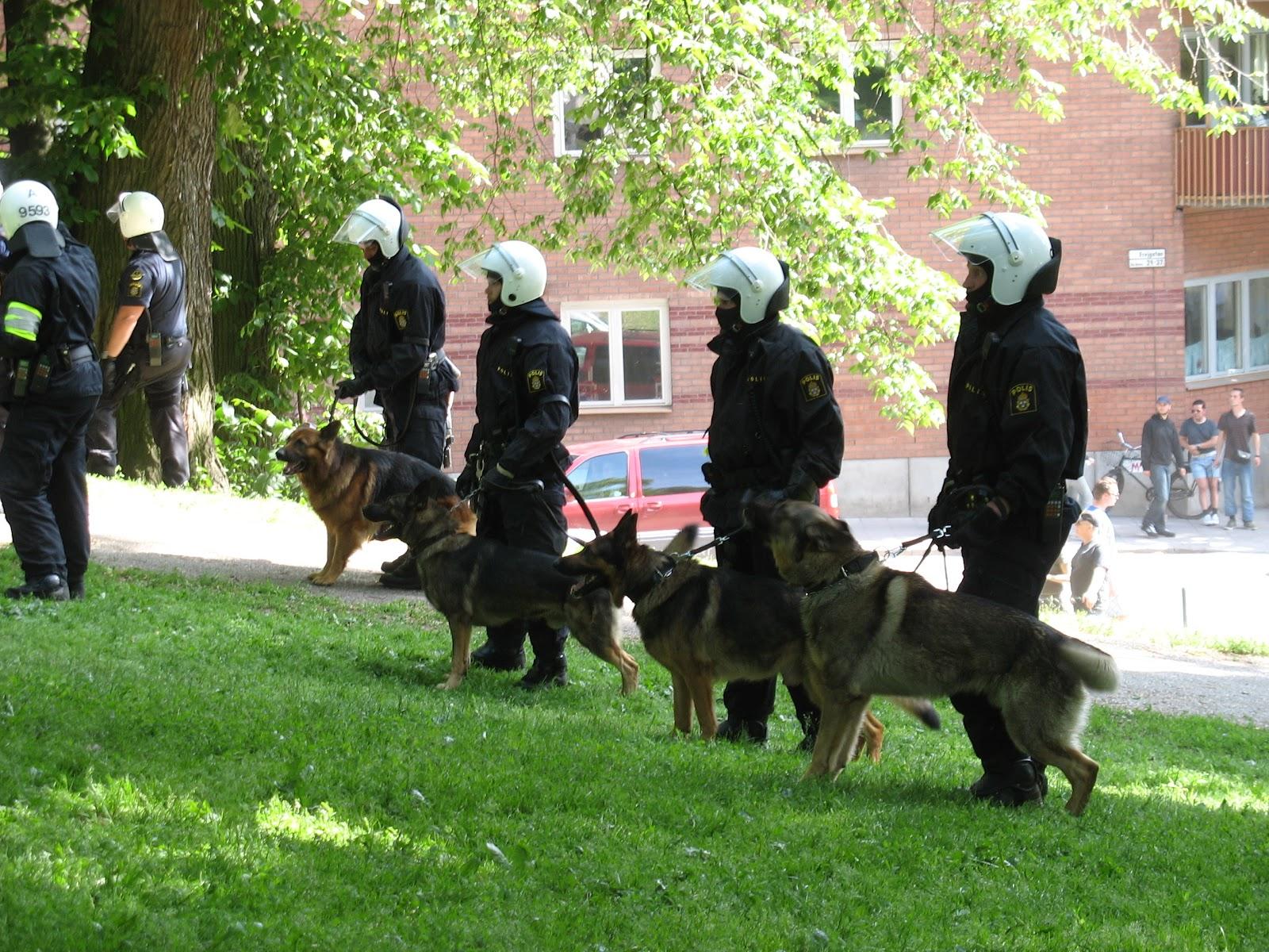 Swedish_police_dogs.jpg