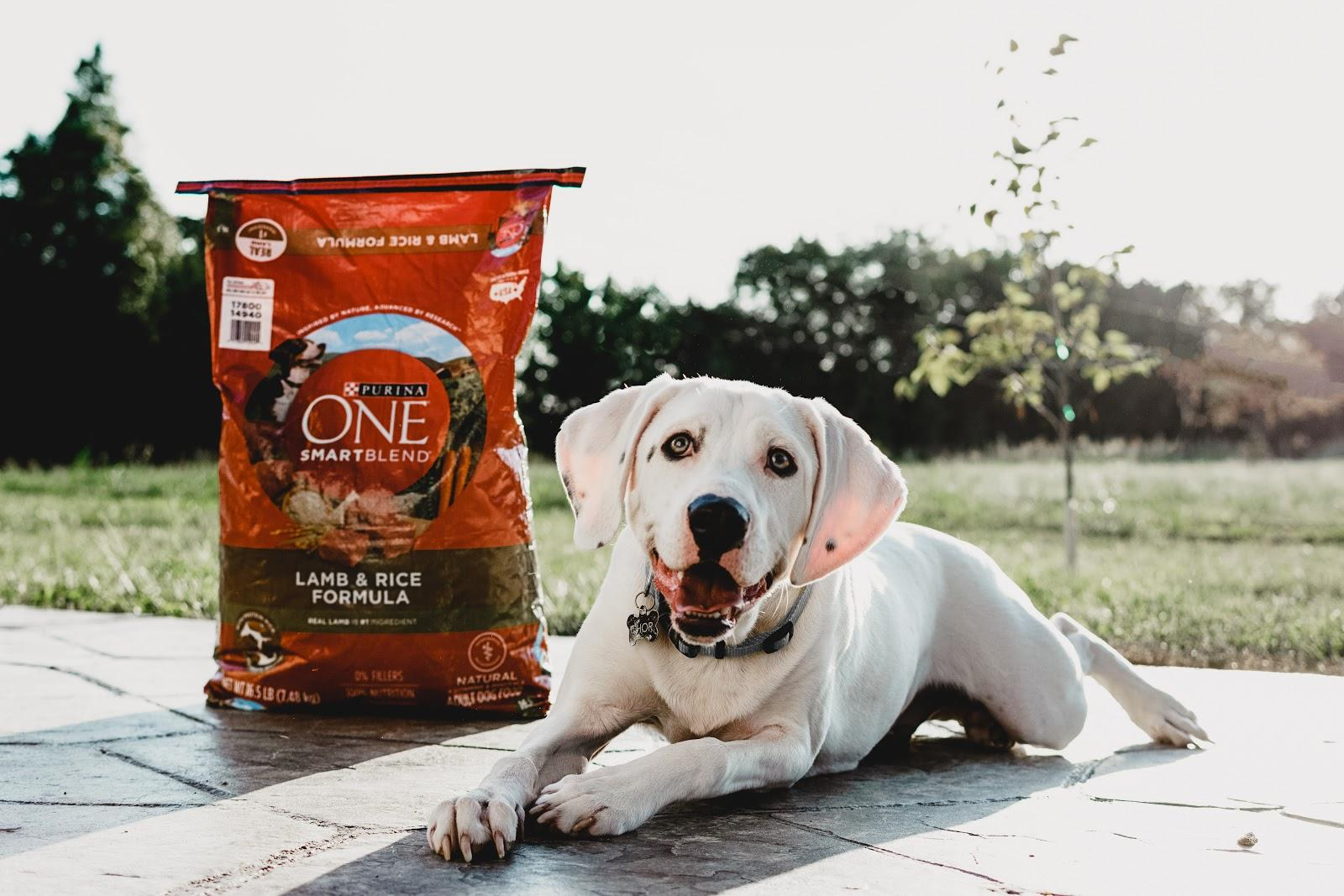 Thor Goes Dog Food Shopping with me at Target Coupon Promo Code Purina PurinaOne Purina One SmartBlend Dog Food Dog Adopted Adoption Lab Puppy Dalmatian Target
