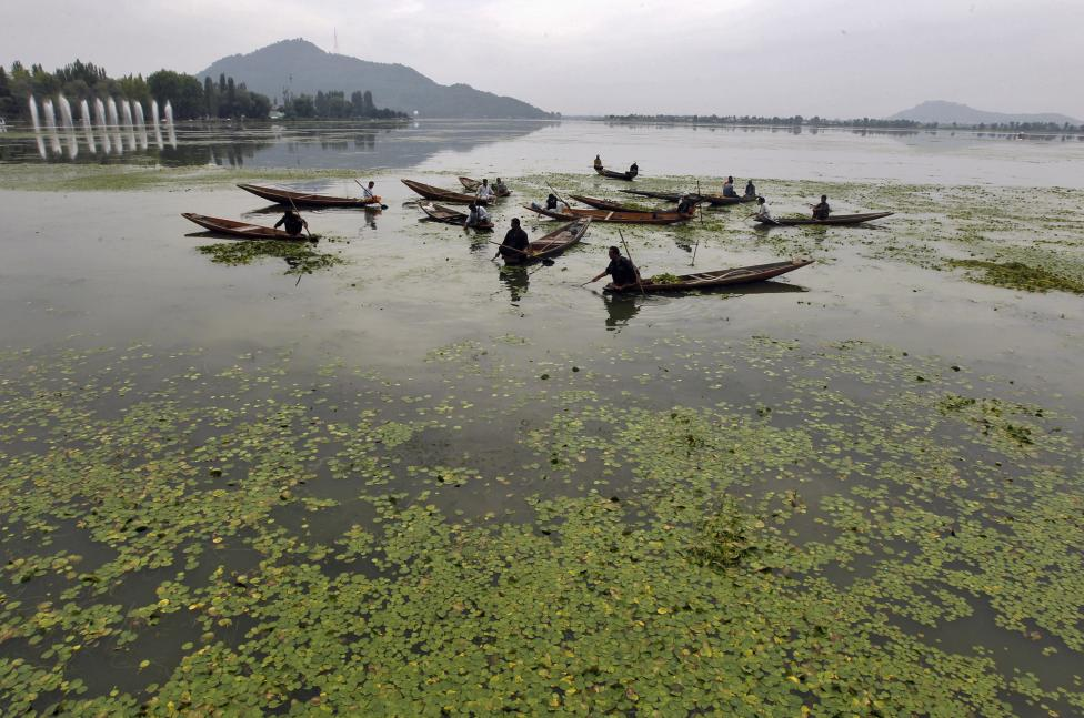 polluted waters of Dal Lake