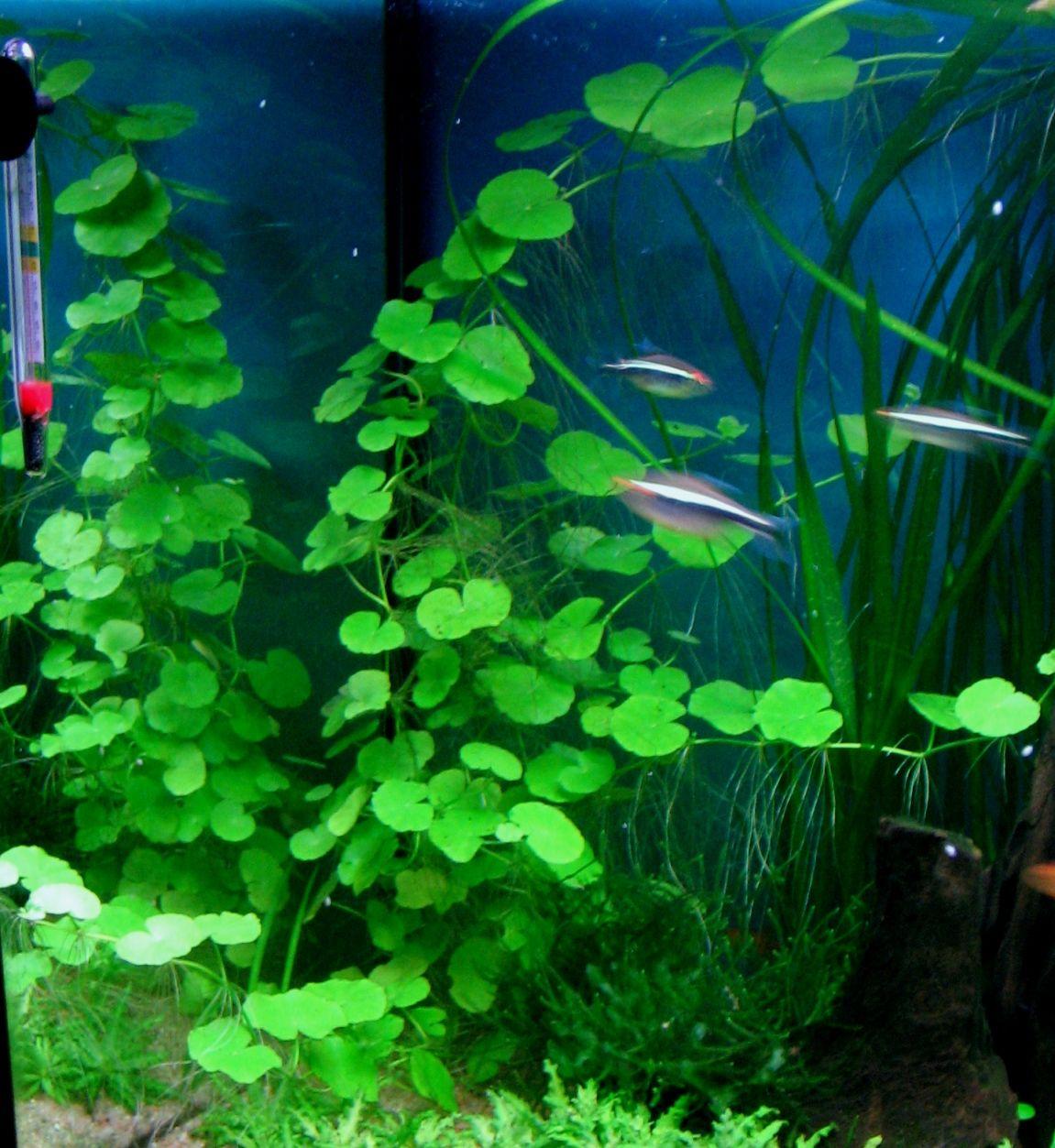 Aquascape Lebih Hidup (pinterest.com)