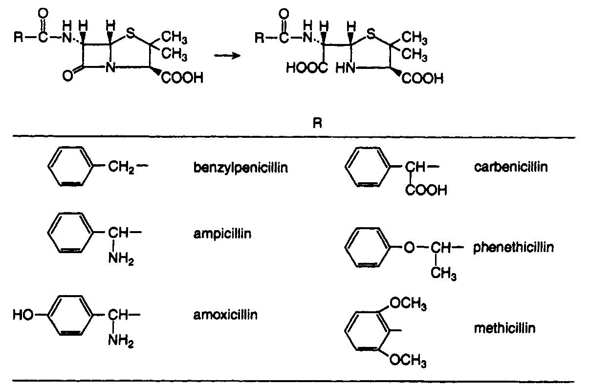 hydrolysis - penicillin.jpg