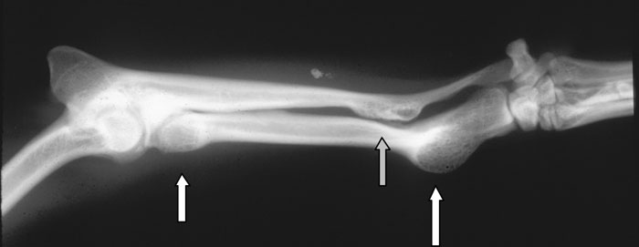 Multiple cartilaginous exostosis occurred in multiple other locations in this dog