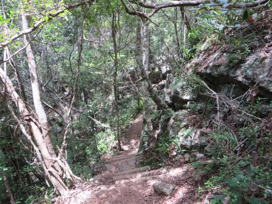 Walk the Airlie Creek Track
