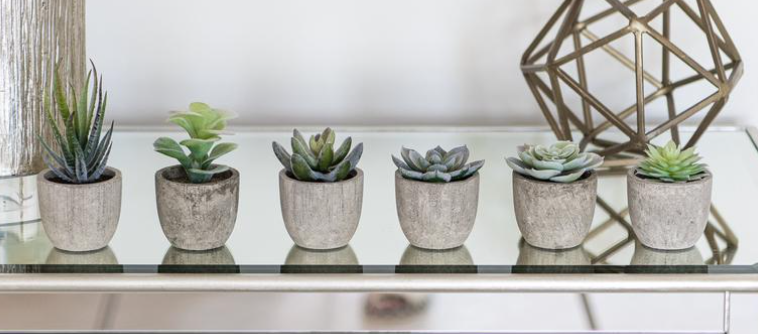 six succulents in cement pots on glass tabletop in home office space