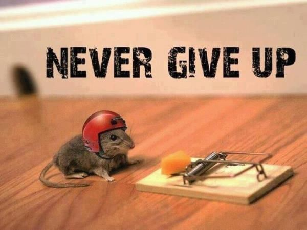 Never Give Up Memes (5+ List)