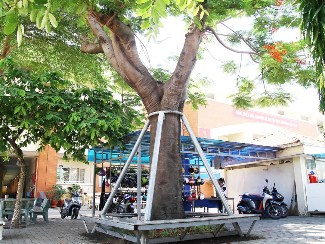 Cây Xanh Miền Nam đơn vị chuyên di dời cây uy tín