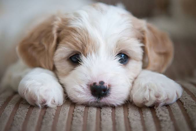 Image result for train a puppy