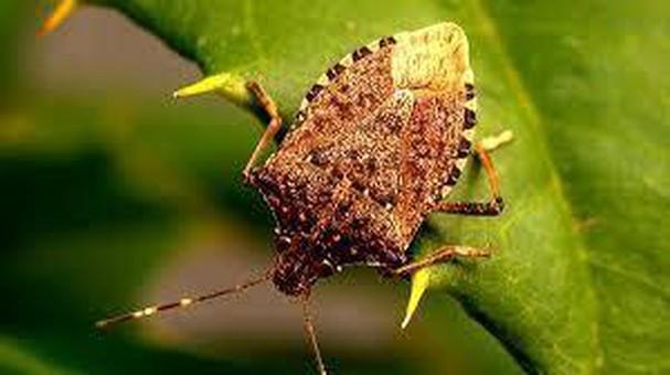 Diễn đàn rao vặt tổng hợp: Những loài côn trùng có ích bà con nông dân nên biết I1yDdSrSwz_R5dDcZDGfbaAMyVHdeM_kdUjk6mETa_HGpa-4SpvctQKhamWf3SkzEczzBYlYEWsY2WkOfx8DAa_c7XO-PNCvP92zFX0Tacexm4AWH2iUZT-QWIWeaMGxBE_wfiaU