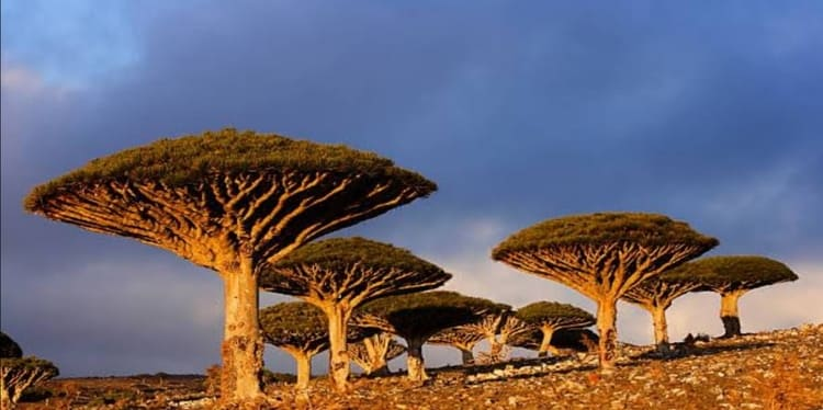 Socotra-island-most-remote-places-on-earth
