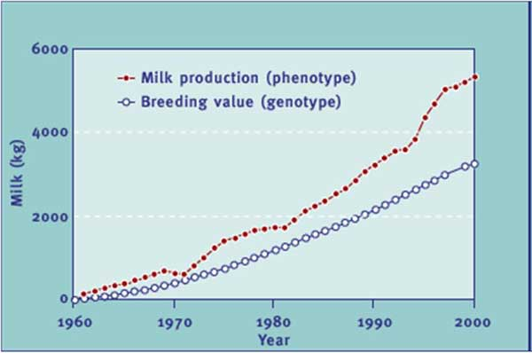 Trends of the genetic merit (breeding value) of AI bulls and actual average milk production of Holstein cows in the United States (Source: Silvia WJ, 2003)