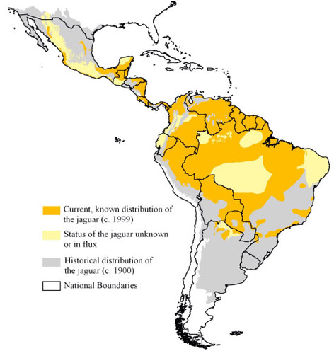 Distribution of jaguar (Panthera onca).