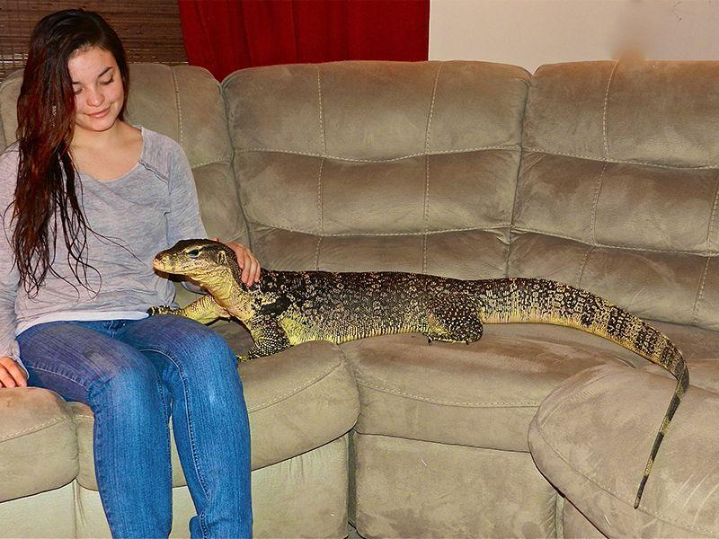 A person sitting on a couch holding a lizard  Description automatically generated with medium confidence
