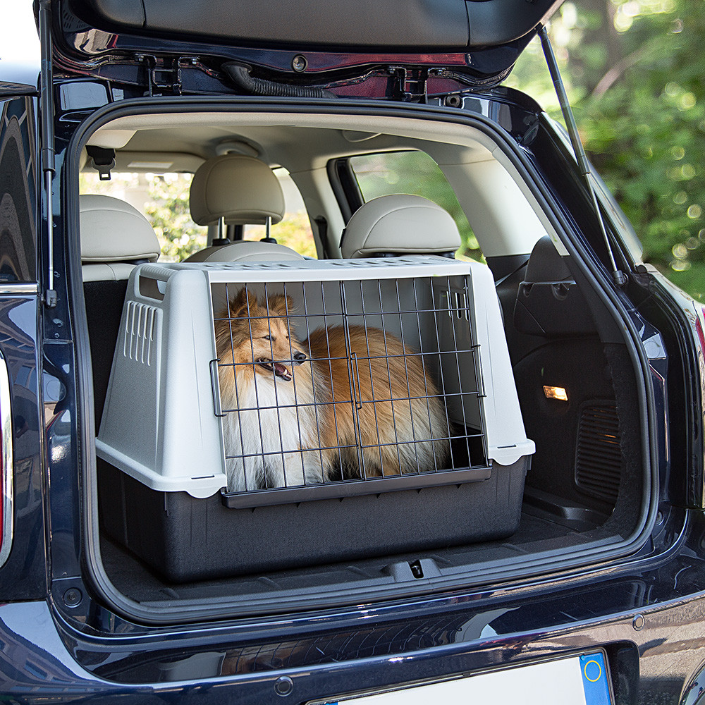 Safe travels with pets - Image 2