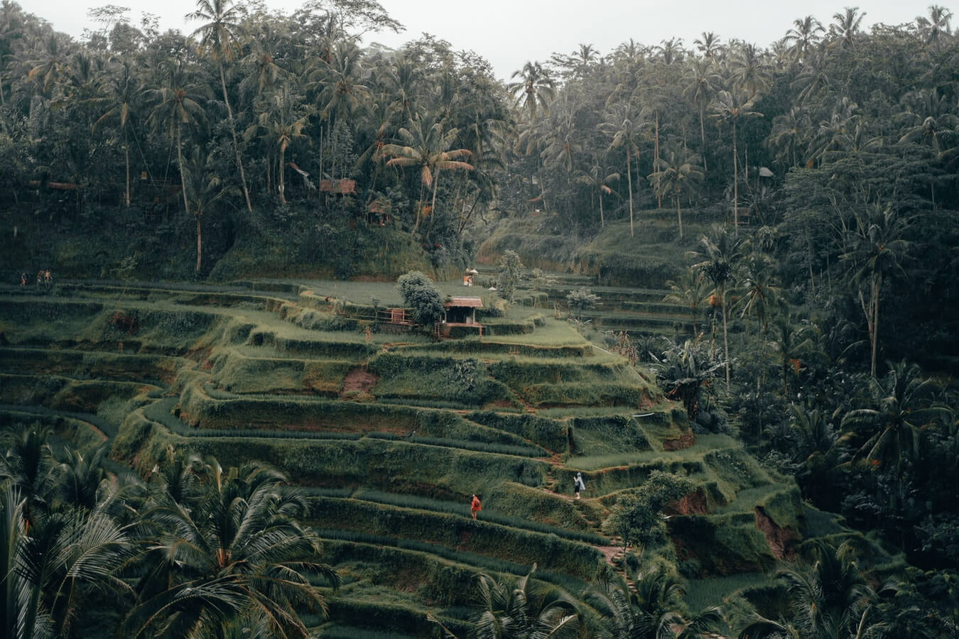 Tegalalang Rice Terrace on a hillside near Ubud in Bali