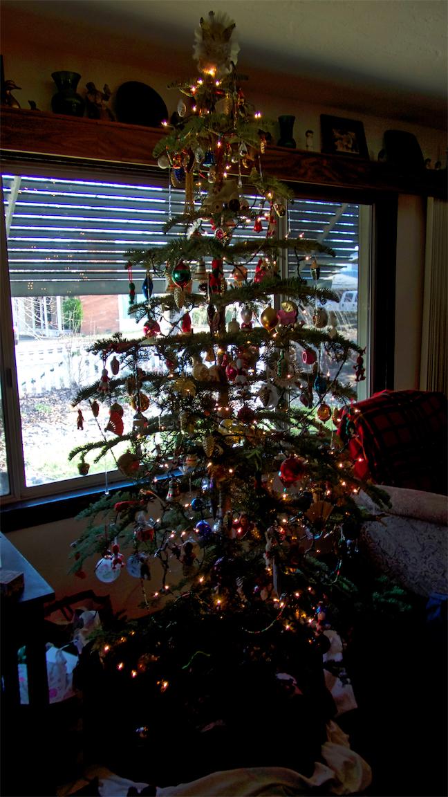 Nan's Tree.jpg