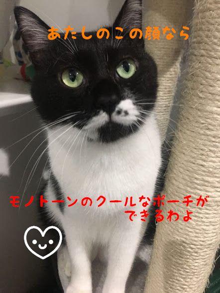 愛猫の写真でハンドメイド手作りねこポーチ!