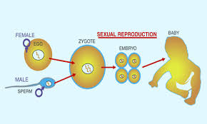 Image result for examples of sexual reproduction