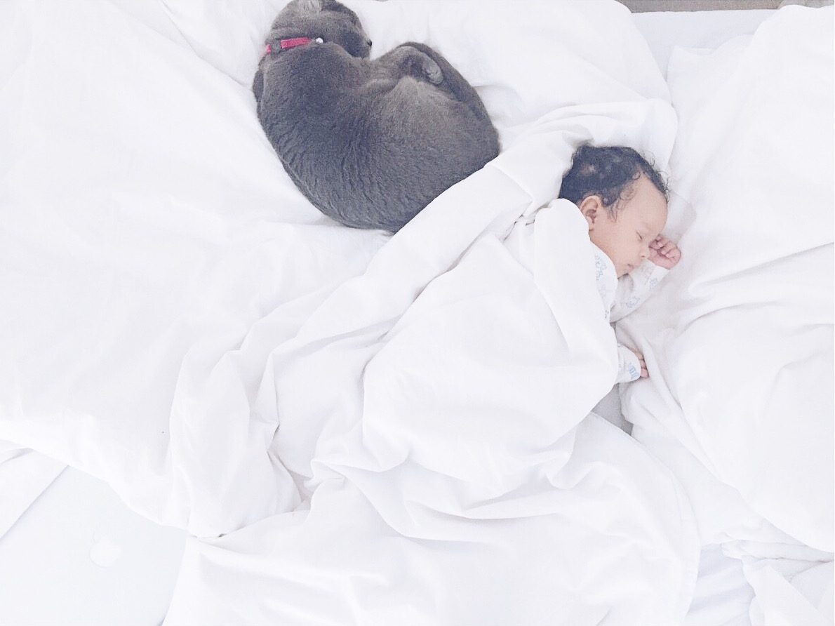 10 ways to introduce your pet to your new baby