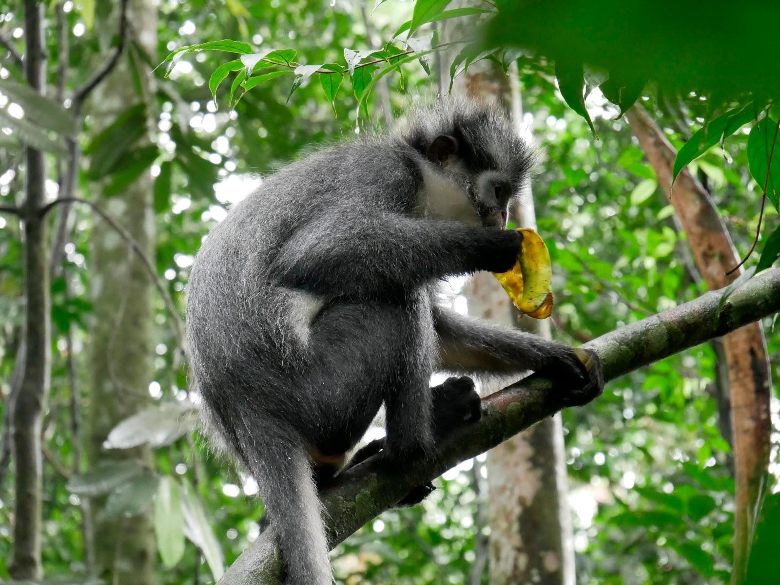 animales en el trekking de bukit lawang