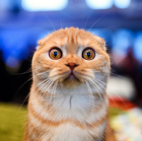 Shocked cat