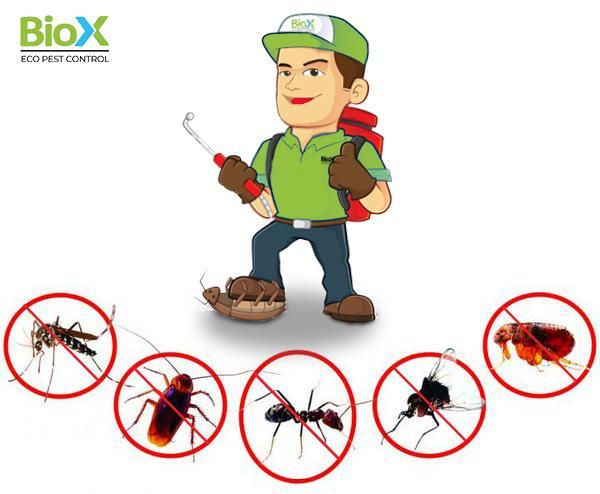 Địa chỉ cung cấp dịch vụ diệt côn trùng tận gốc chất lượng
