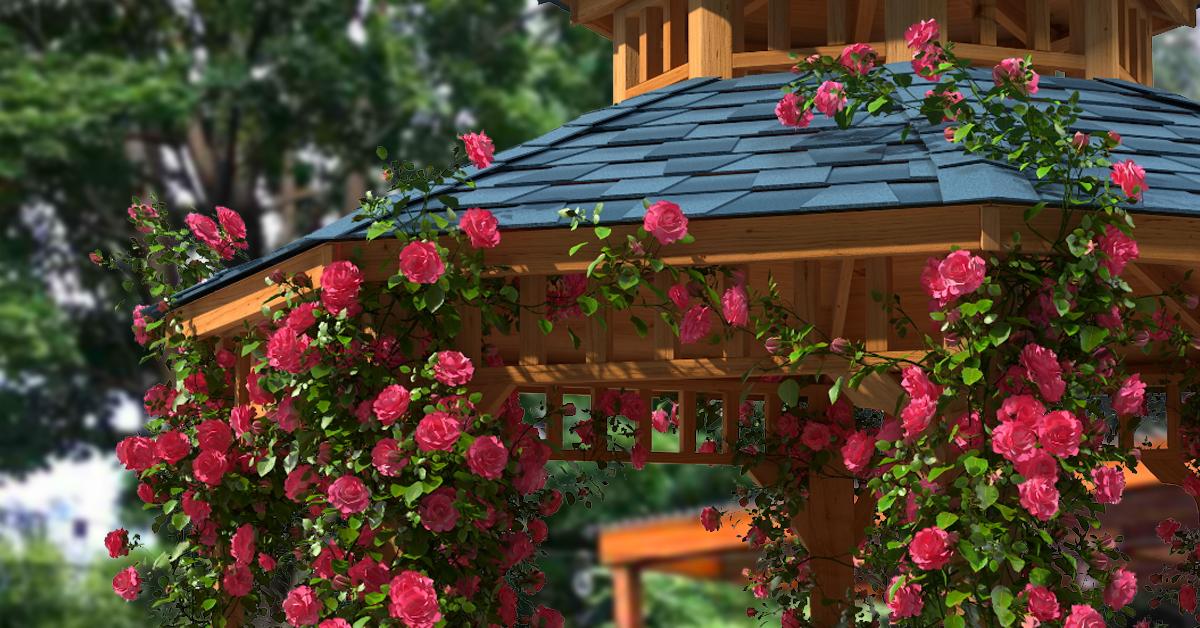 záhradný altánok s farebnými popínavými ružami