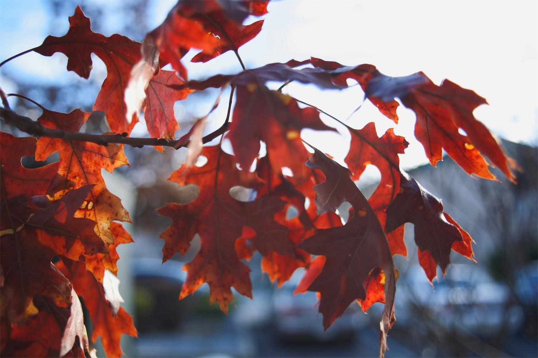U V Leaves 3.jpg