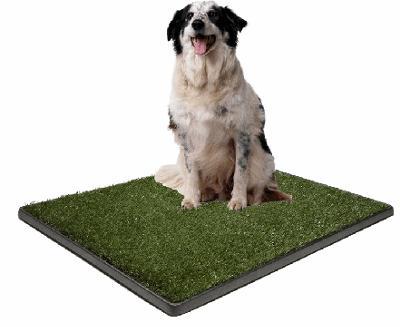 potty grass.jpg