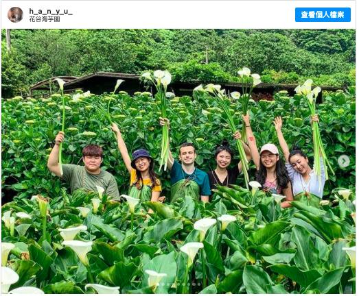 2021陽明山賞花 採海芋 推薦:花谷海芋園,包含交通方式、開放時間