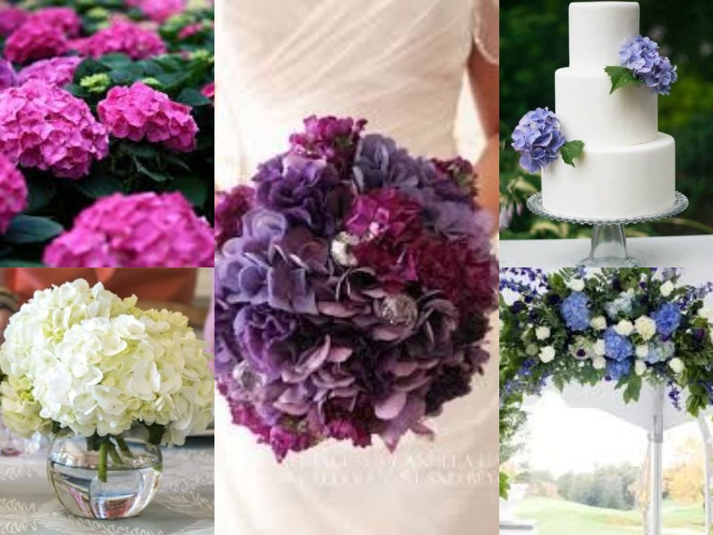 Flower blog floral ideas and arrangements avas flowers they are popular wedding flowers known for their large globe shaped flower clusters these come in berry toned colors and are great for filling up a wedding izmirmasajfo Gallery