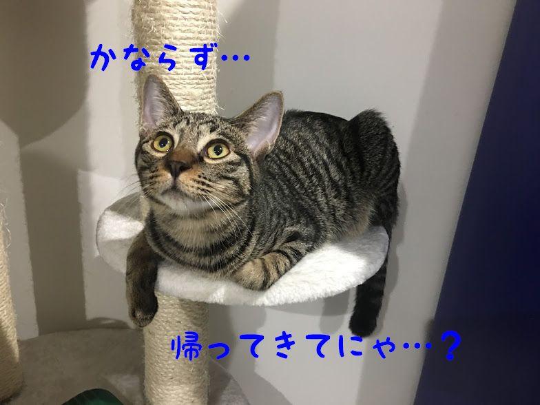 猫の留守番は何日が限界?寂しがるの?注意点と必要なアイテムとは