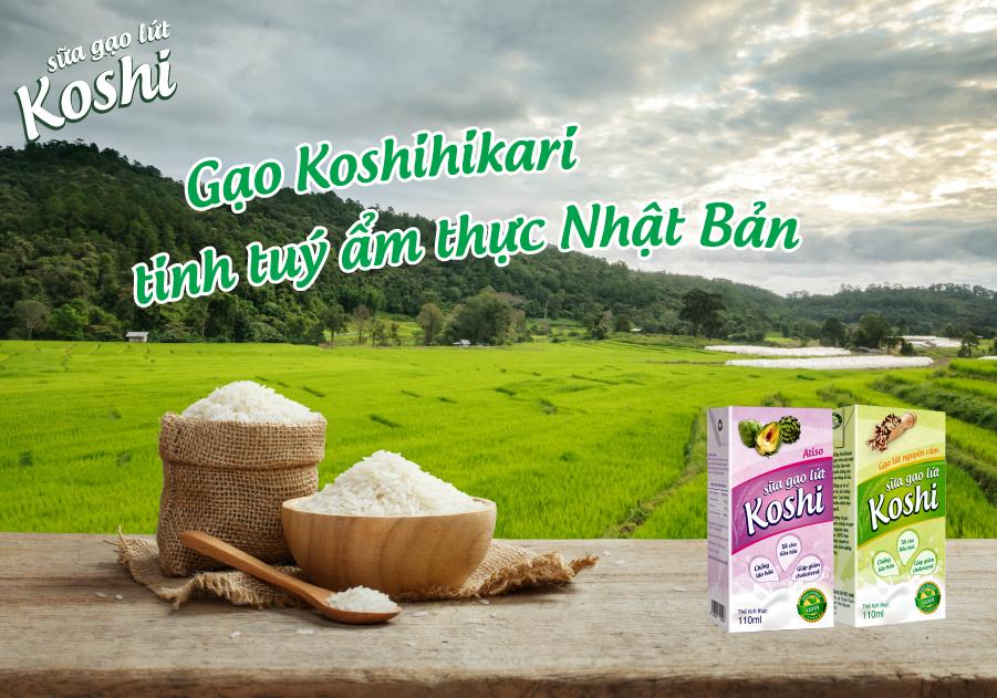 Sữa gạo lứt koshi có giúp làm giảm cân