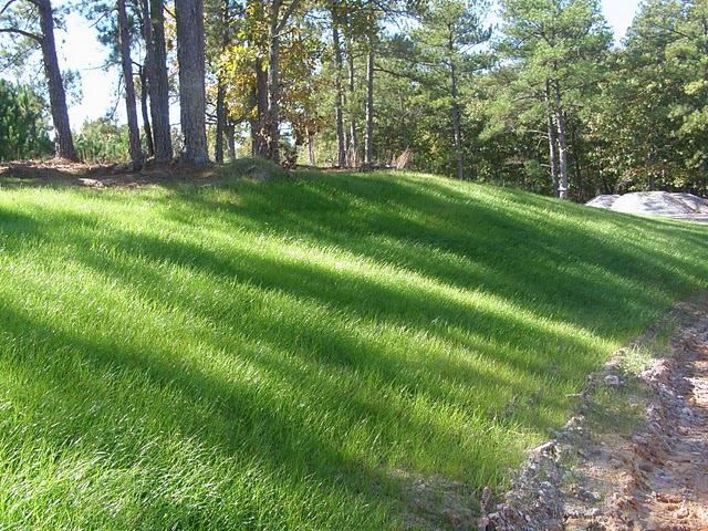 guide to the best bermuda grass seed