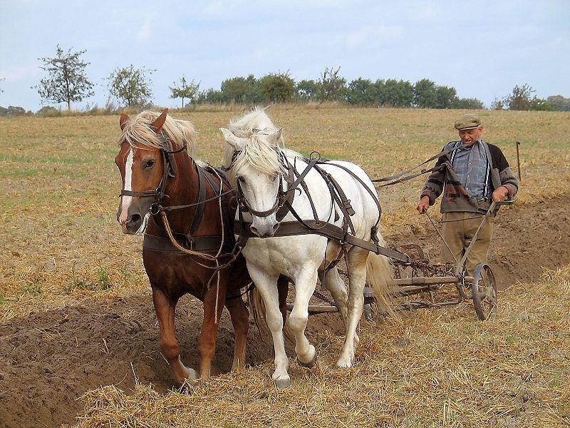 arado tirado por caballos.jpg