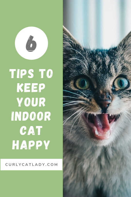 6 tips to keep your indoor cat entertained