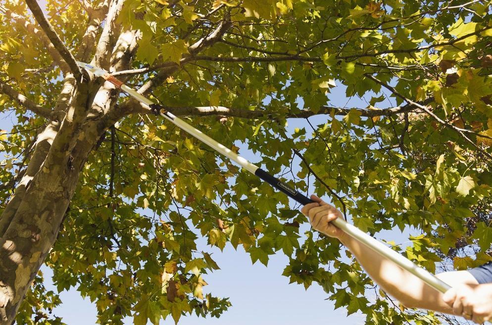 Árvore com galhos secos  Descrição gerada automaticamente com confiança média