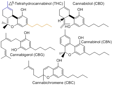 cancer marijuana research papers explained cannabinoid molecules activate the body to kill cancer