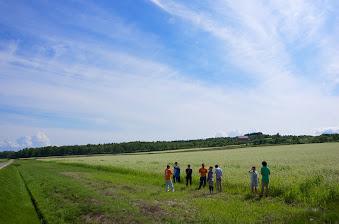 北北竜町のそば畑のひとつ