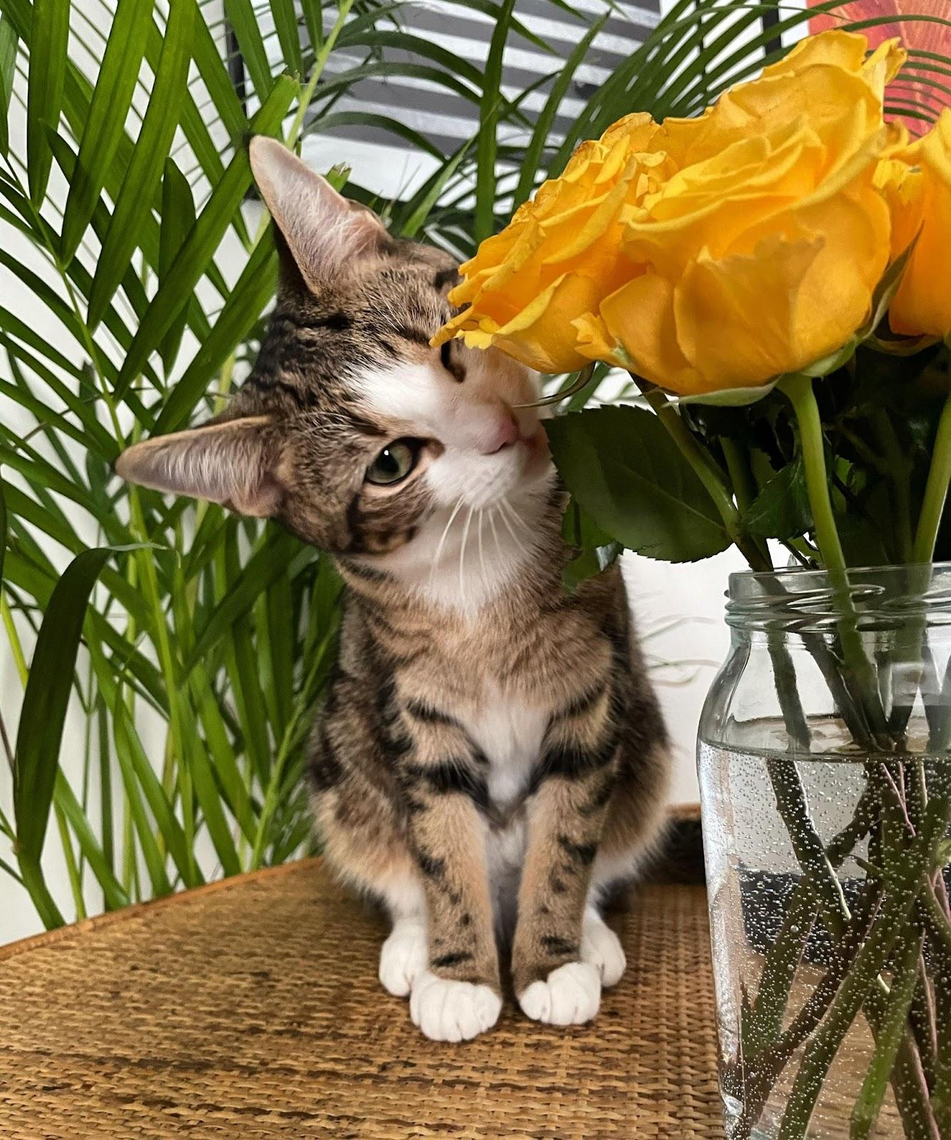 Rebecca's cat Olive