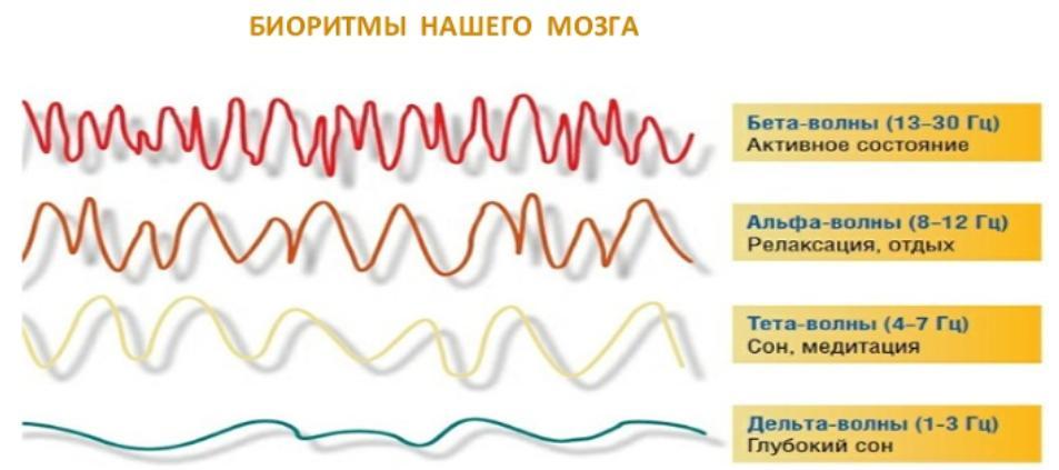 Биоритмы мозга для письма 4 в Золотое правило одной минуты.jpg