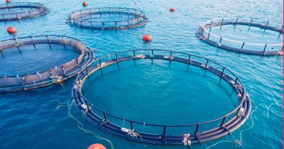 Your Support Needed to Help End Industrial Fish Farms