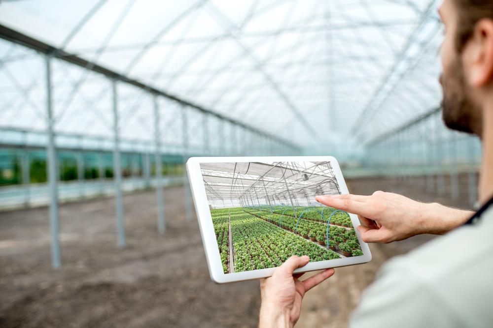 Tecnologia pode prever resultado de ações nas plantações, ajudando o produtor a tomar decisões antecipadas. (Fonte: Shutterstock/RossHelen/Reprodução)