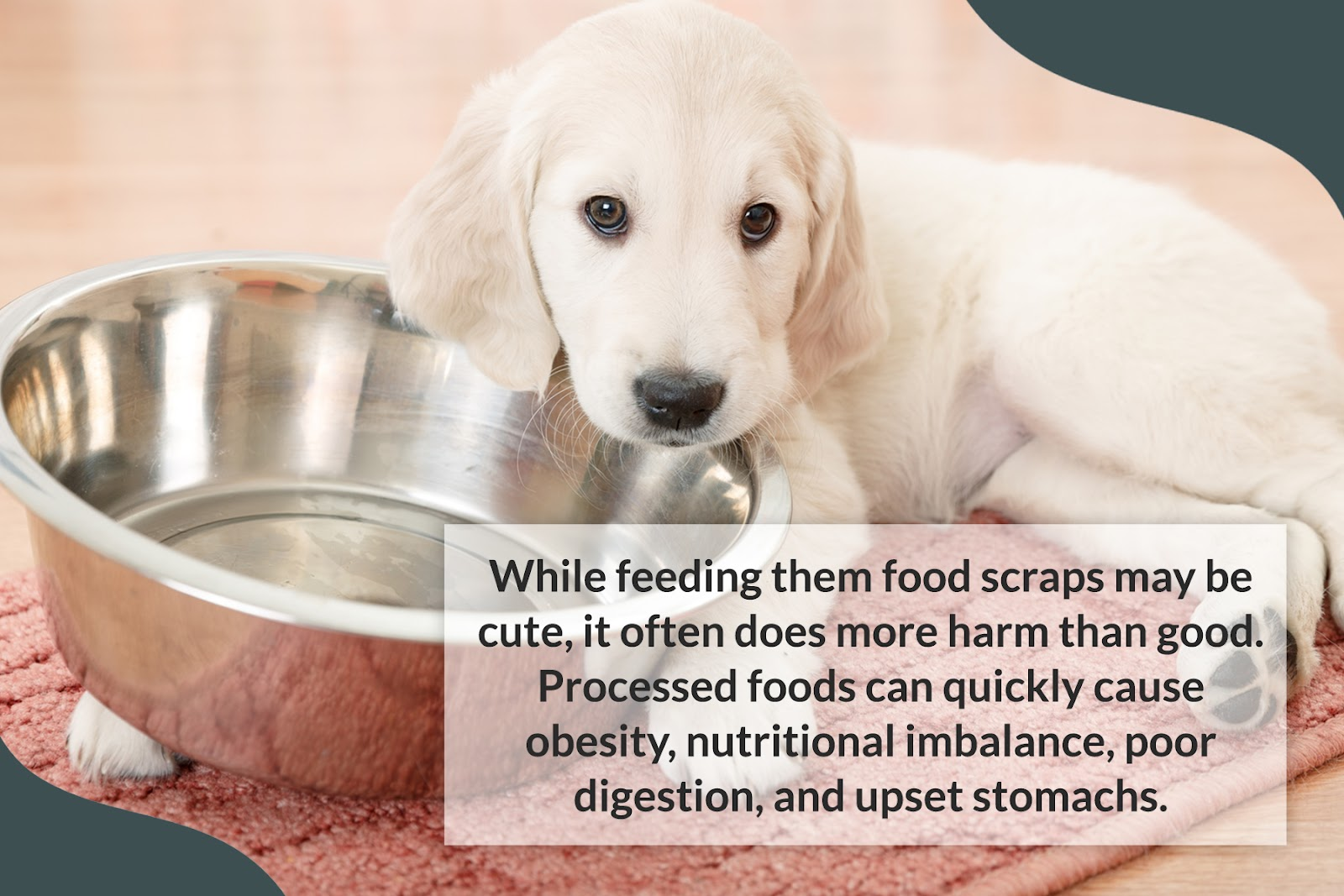 processed foods leads to obesity in dogs